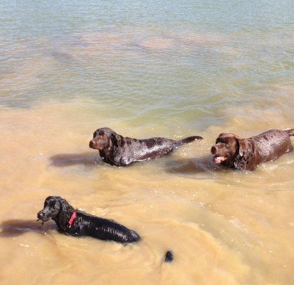 3 Swimmers at Red House Kennel