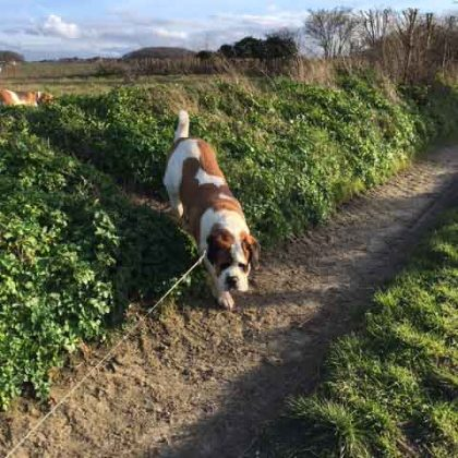 Walks in the sunshine | Red House Kennels
